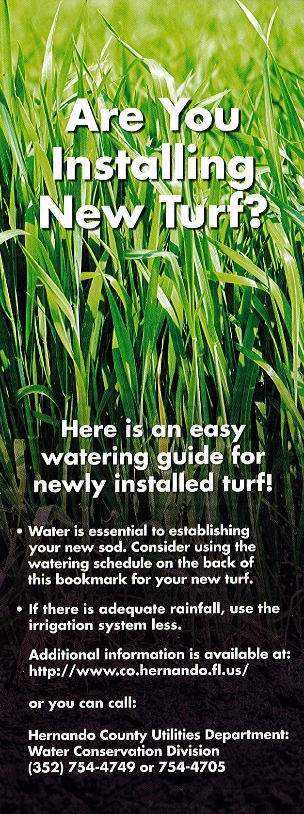 Watering Guide for Newly Installed Turf